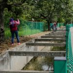 CONTINÚA INTENSO RESCATE DE CANALES EN CIUDAD MADERO